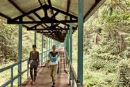 A Bridge of Two Worlds! Jungle Walk - Safe, Authentic, Ayahuasca Plant Spirit Healing Retreat in Peru - Casa Galactica