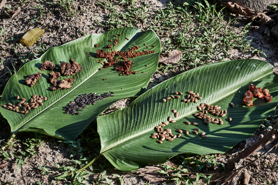 Native Seeds in the Amazon Rainforest - The Mishana Community - Home of Casa Galactica Ayahuasca Retreats & Noya Rao Dietas in Peru