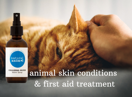 How to use Colloidal Silver for treating animal skin conditions and first aid