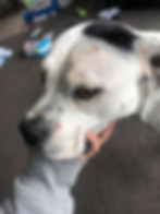 Dog healed with colloidal silver skincare by Natural Animal NZ