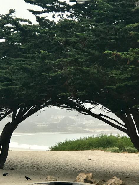 Cypress Arch