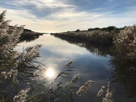 Long Shadows on Long Pond