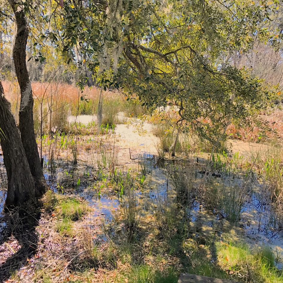 Marsh Palette