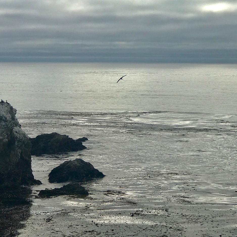 Whale Wake