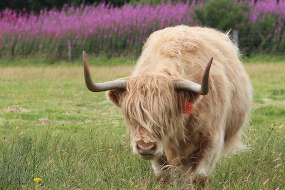 Inverness & Nairn Explorer