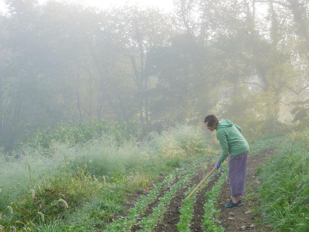 Weeding Stonecrop Farm Blacksburg VA