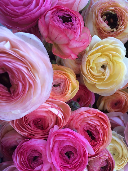 Jumbo Market Bouquet