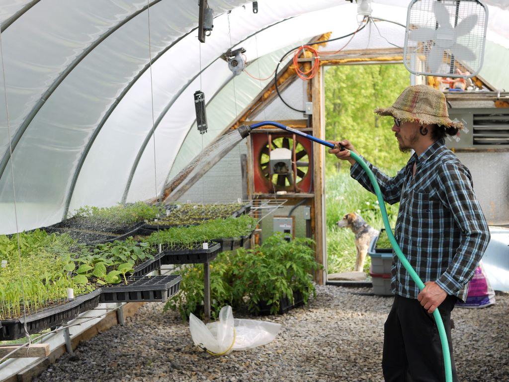 Watering microgreens Stonecrop Farm