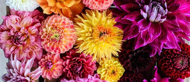 Fall Flower Share
