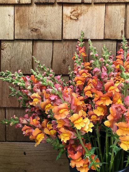 Bulk Flower Bucket