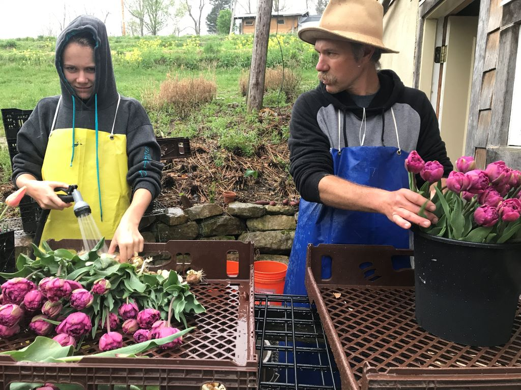 tulips Stonecrop Farm Blacksburg VA