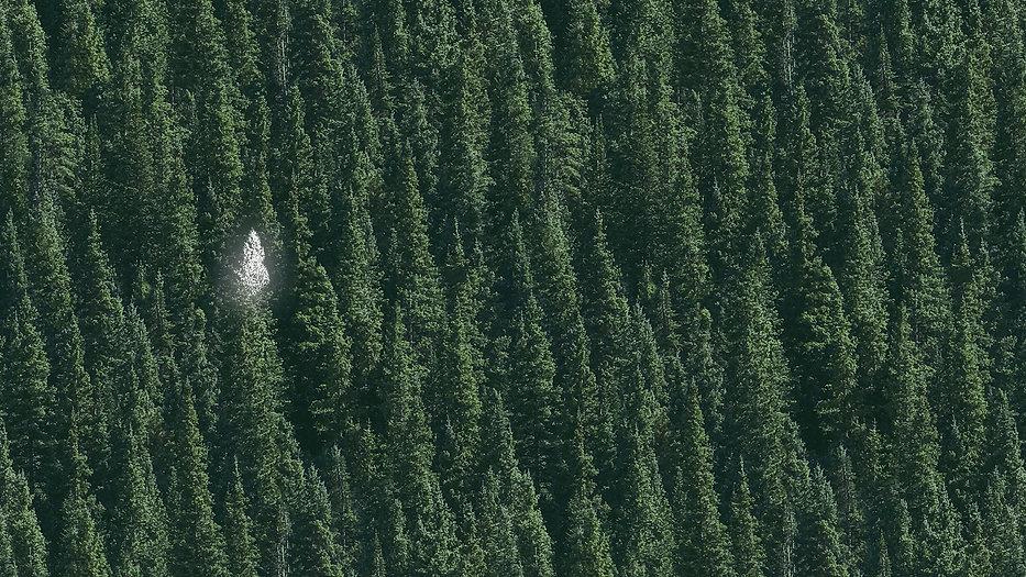 Treedarker.jpg