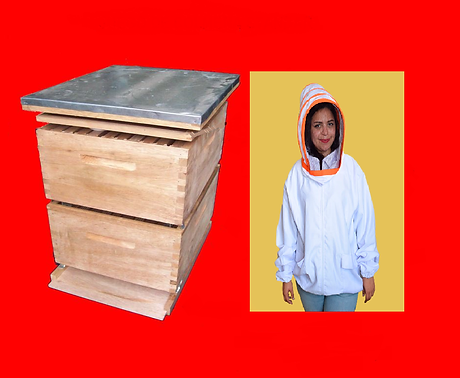 bee hive.png