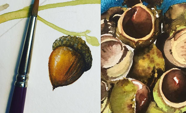 watercolour and pencil drawings showing how to draw chestnuts and arcorns