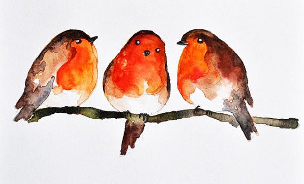 Watercolour paiting of three robin red breasts, small birds sitting on a branch. Little winter birds.