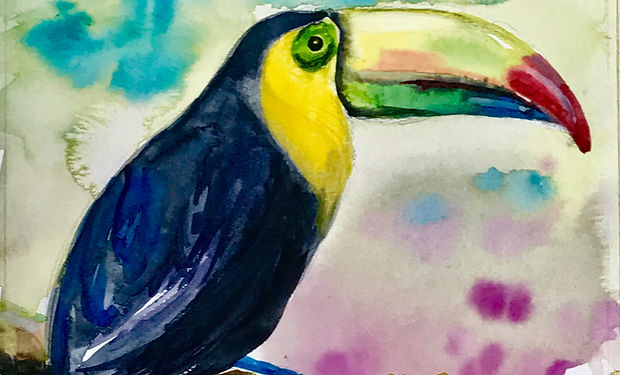 colourful watercolour paiting of a tropical bird the toucan