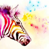 watercolour painting of a zebra with rainbow patten pink, yelow, blue and green.
