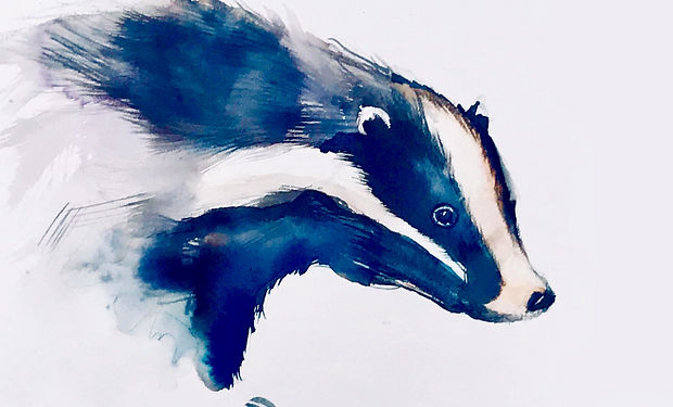 ink and wateclour painting of a badger