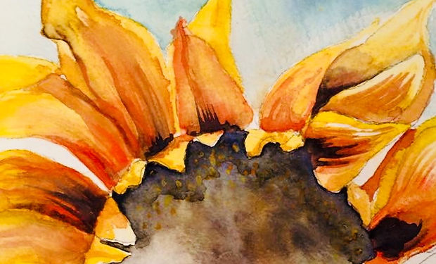 watercolour paintin of a sunflower