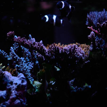 Problemas de pH en el acuario: Las cuatro causas más comunes