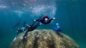 El viejo del océano: Un enorme coral de 400 años.