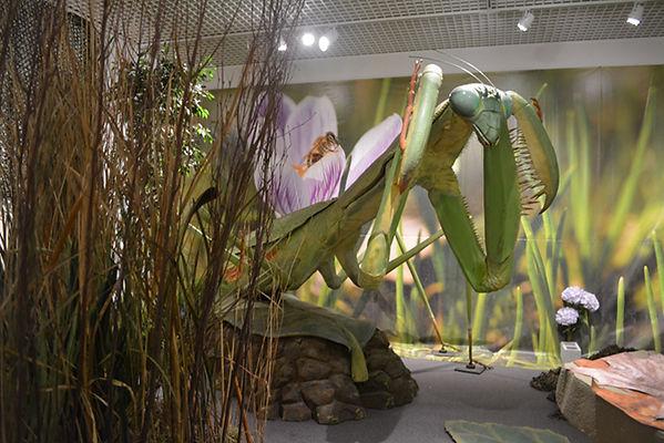 Выставка гигантских насекомых 04.jpg