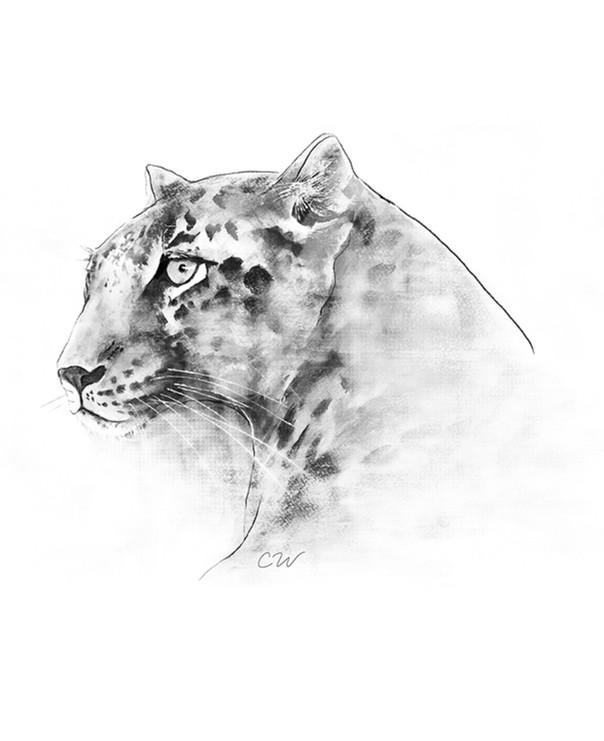 Leopard | Mixed Media