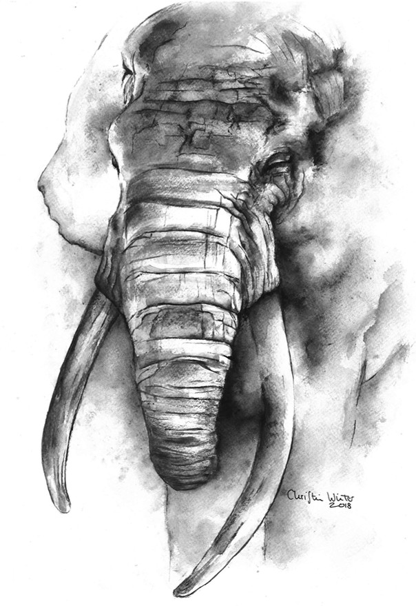 Big tusker | Watercolor