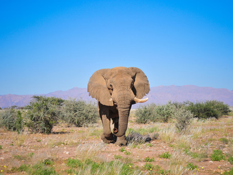 A personal tribute to an elephant legend!