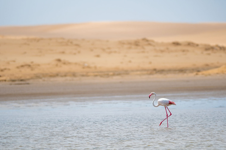 The flamingo and the dune