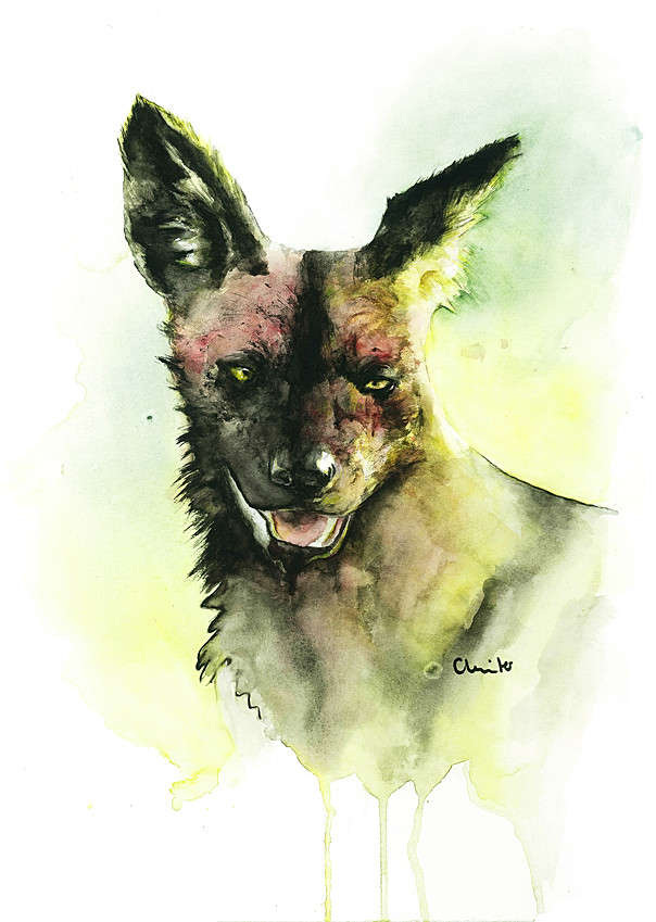 The painted wolf   Watercolor