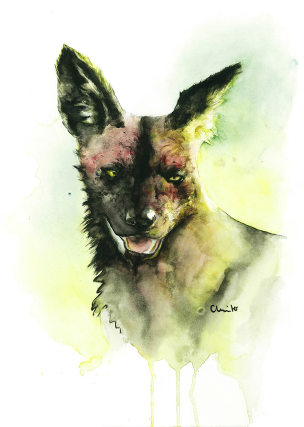 The painted wolf | Watercolor