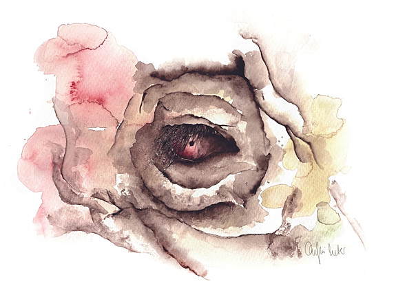 The eye of an elephant   Watercolor