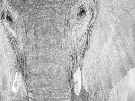 The meaning of elephants
