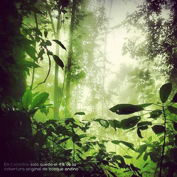 En Colombia solo queda el 4% de la cobertura de bosque de niebla original