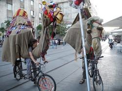 גמל על אופניים