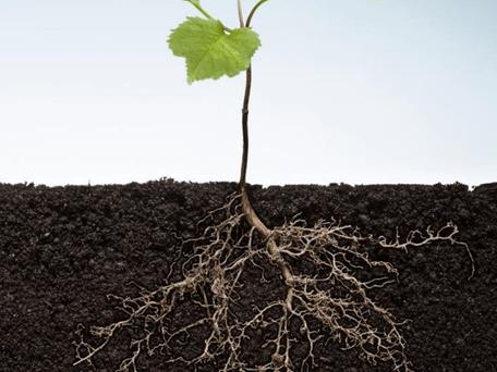 Métodos adotados pelas plantas para absorverem nutrientes do solo