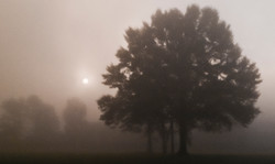 Rising in the Mist