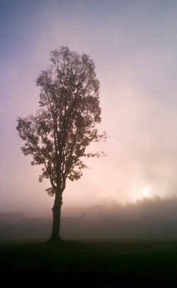 Rising in the Mist 2