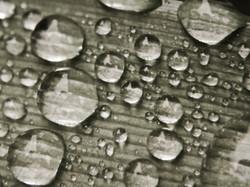 Sepia Droplets