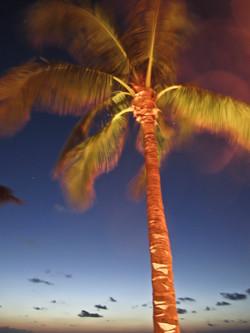 Palm at Night