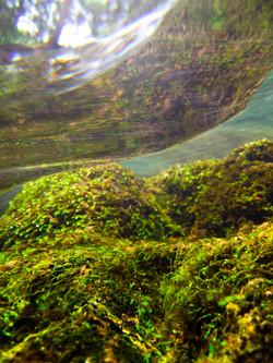 Under Water Reflection