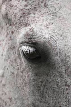 Eye Lash #2