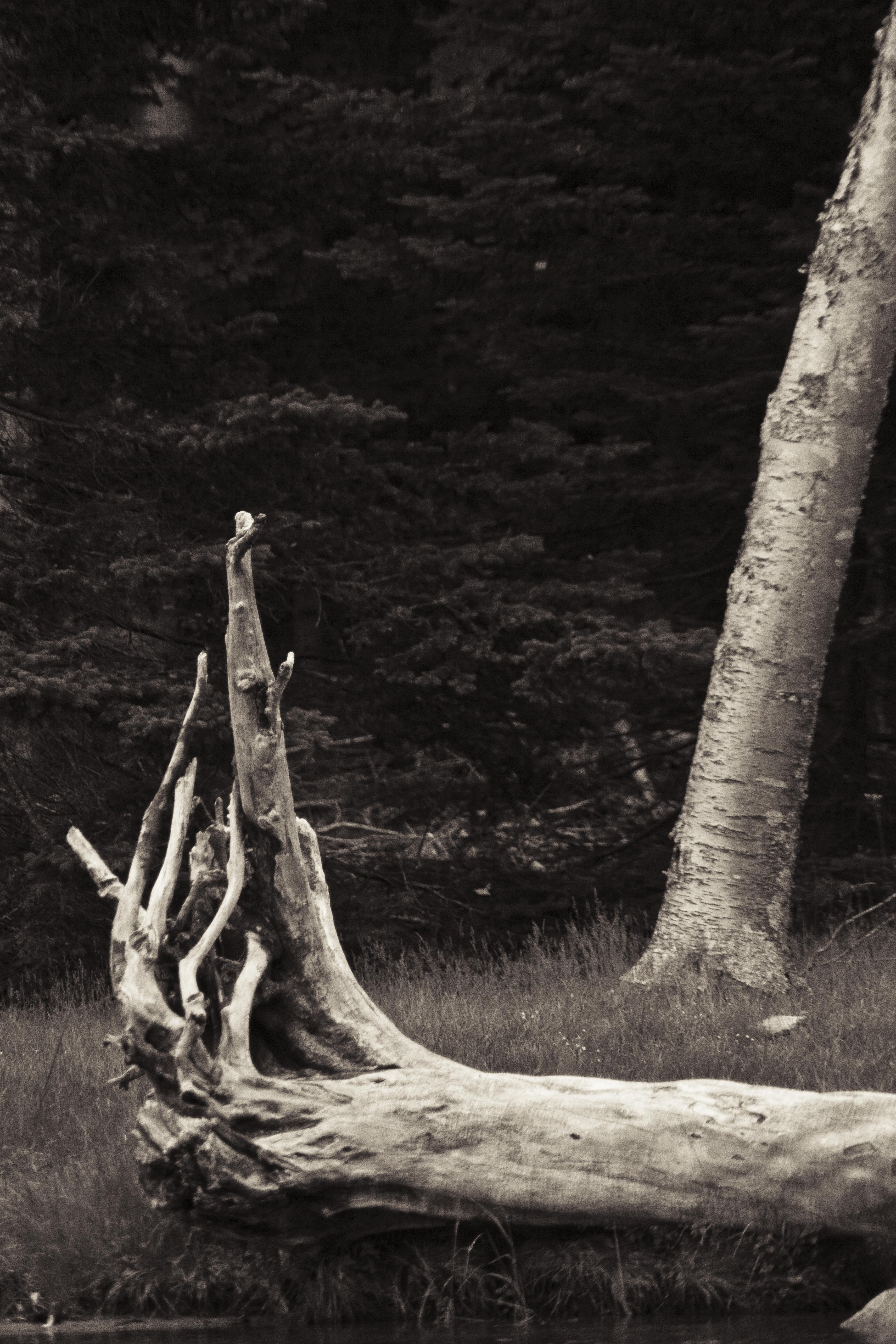 Grasping Tree