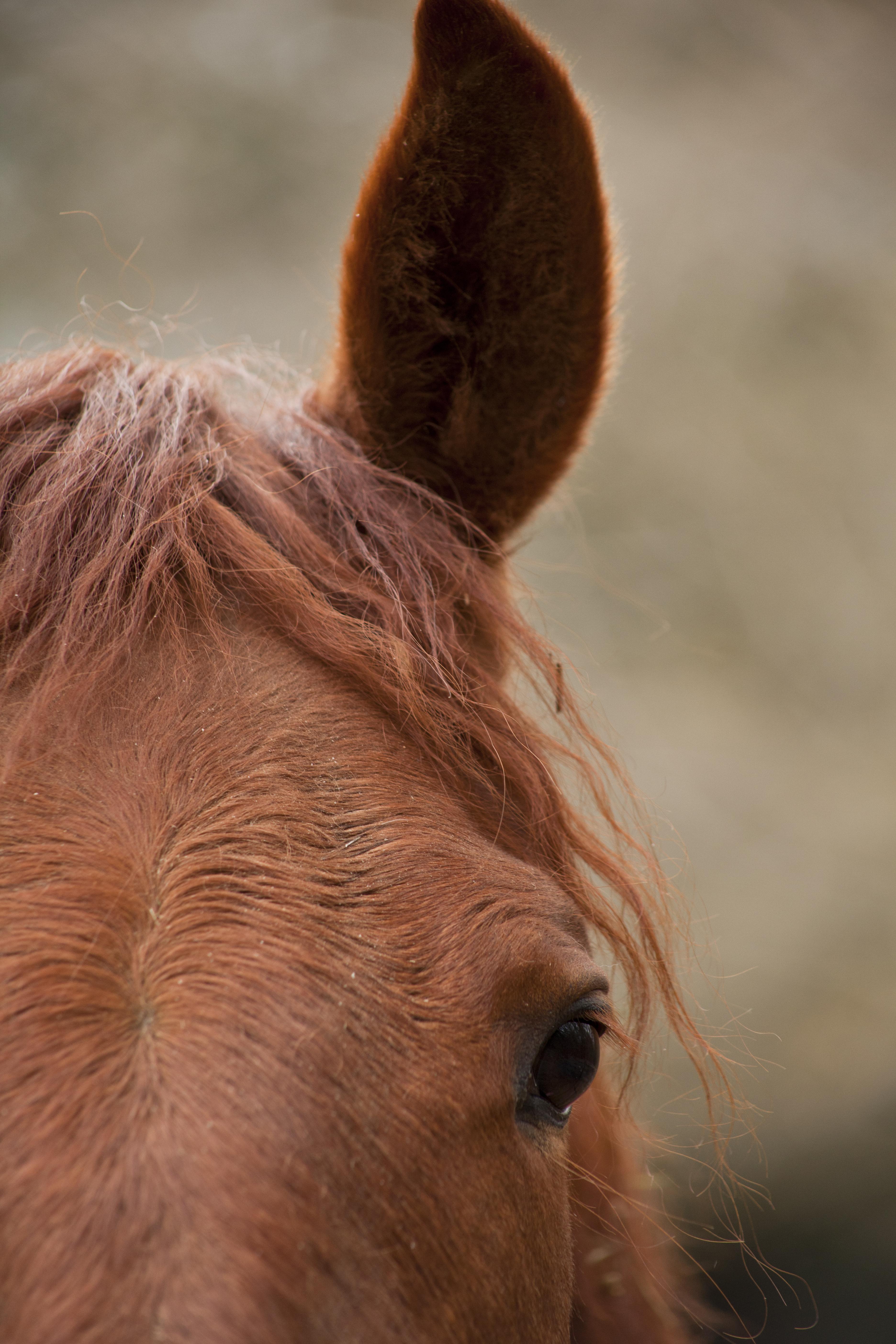 Horse #3