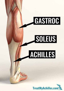 Anantomy of the calf muscles and Achilles tendon.