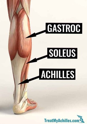 The anatomy of the calf muscles and Achilles tendon.