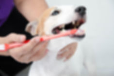 歯周ポケットに擦り込むように軽く歯茎をマッサージするだけの簡単ケア。 毎日手軽に続けられる口腔ケアジェルvi001