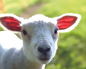 動物たちの幸せを科学を基に考える AWIOアニマルウェルフェア国際協会