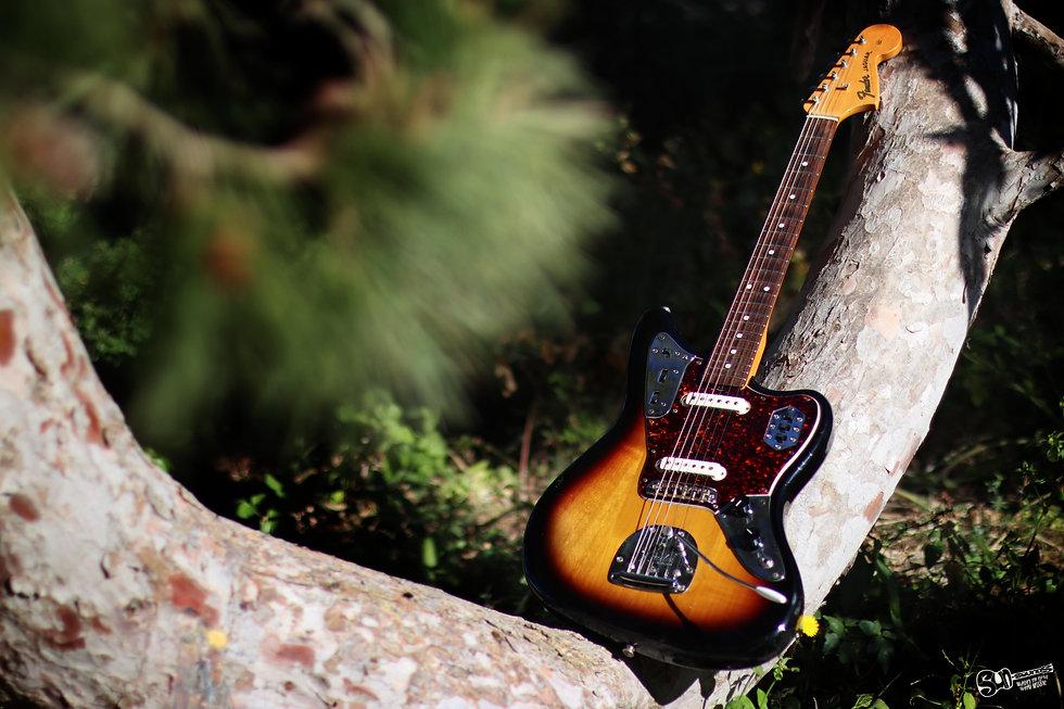 FenderJaguarPhotographyBuskettGardensMal